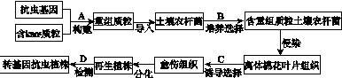 常见元素的单质及其重要化合物(一)