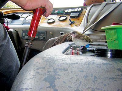 公交车司机边开车边耍鸟