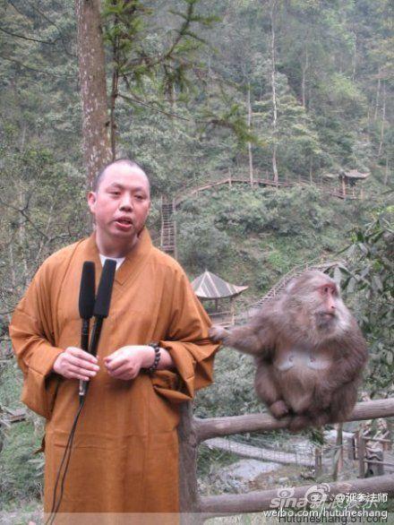 延参法师录制视频,遭猴子骚扰