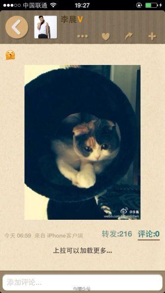 李晨也晒出了同一只猫