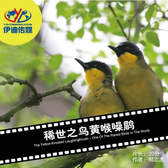 动物与自然电影周展映电影:《黄喉噪鹛》
