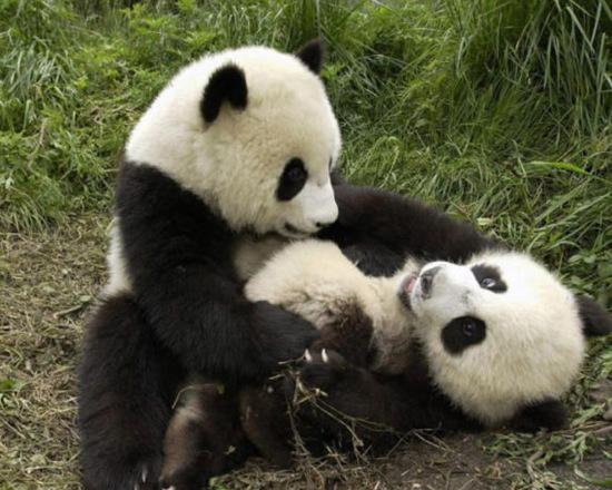许秦豪《好雨时节》炒冷饭?郑雨盛痴迷熊猫