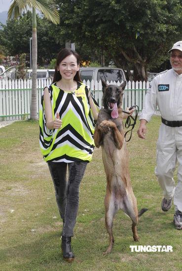 杨思琦家中养了好几只狗