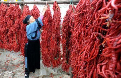 中国最为排斥辣椒的三个群体是:闽南人、潮汕人和客家人