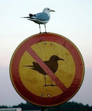 """""""目无法纪!说你呢那只鸟!"""