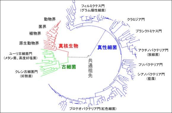 【御坂情报网络】T13巴哈姆特心核场景小ネタ