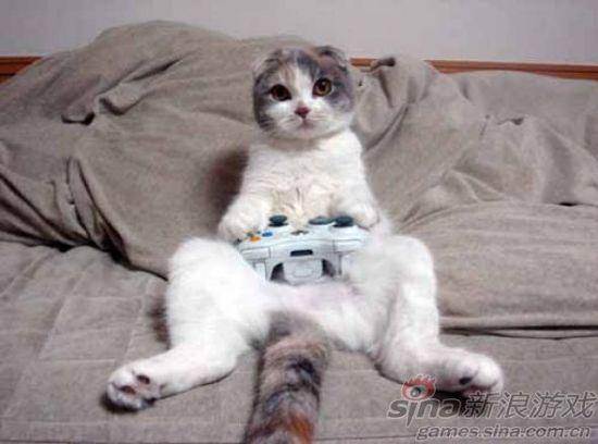 猫还会玩手柄