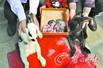兔妈产下12只小兔