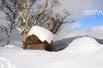 冬季到长野去看雪