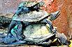 实拍:乌龟高难度叠罗汉(图)