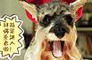 超雷的圣诞长袜狗