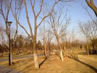 万象新天 实景图 周边常营公园