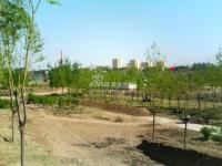 北京华侨城 实景图 施工中的公园