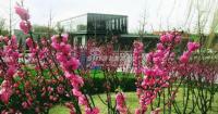 北京华侨城 实景图 园林景色