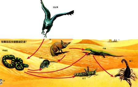 食物链(图中动物