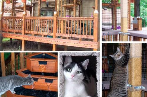 爱猫人士仍在有限户外空间为猫们建造属于它们的理想场所。