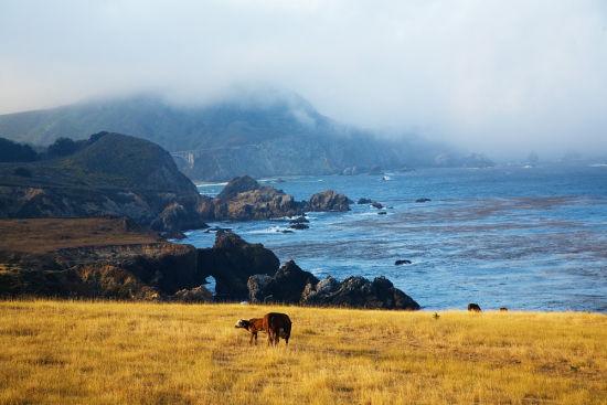 美丽的加州海岸(新浪配图)