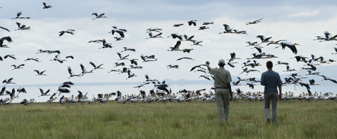 马尼亚拉湖国家公园Lake Manyara National Park