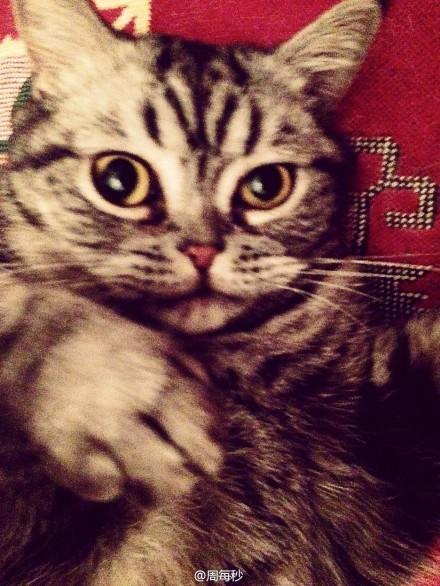今天,我们就让4只可爱的猫咪当麻豆,学画100%猫眼妆眼线.