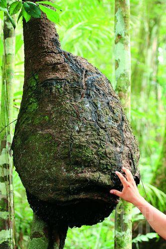 雨林中的动物图片