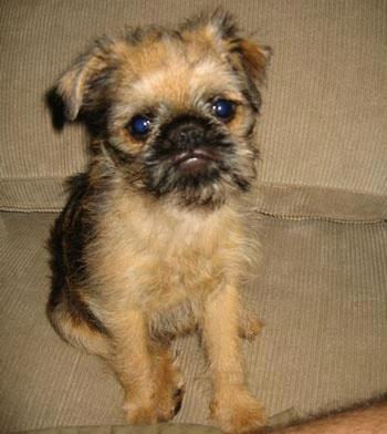 在澳大利亚悉尼有只犬以联合国秘书长潘基文的名字命名,而这只宠物犬
