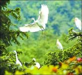 鸟类栖息的殿堂