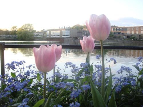 英国:春风笑 百花开