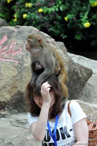 被猴子欺负的游客