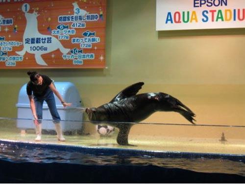 海狮表演一指禅
