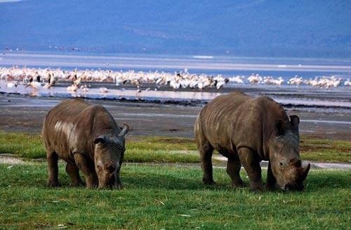 肯尼亚的动物是风景中最吸引人的一部分