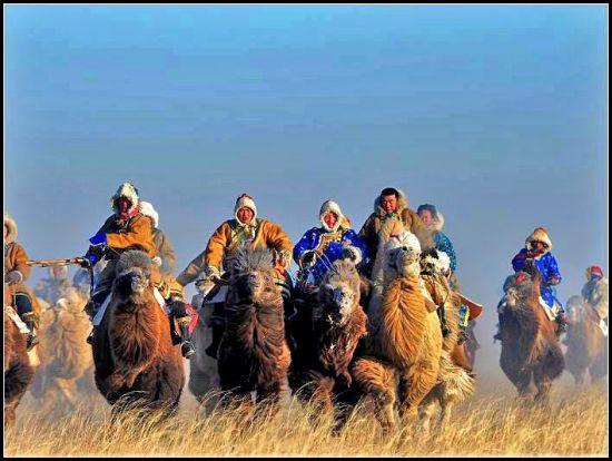 骆驼文化节