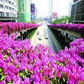 广州满城皆绿韵处处花扶疏