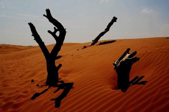 想象中的宁夏,是个贫瘠荒芜之地
