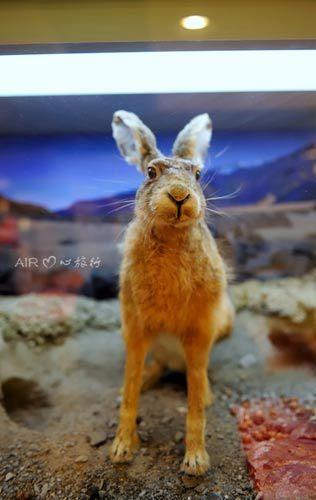 屏幕壁纸可爱兔子