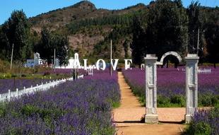 紫海香提 山水田园中的三爱之旅