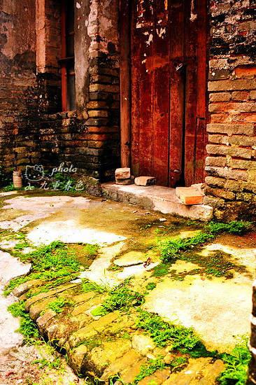 门口的地上长的草