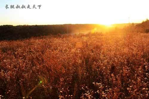 平常的山林在金色夕阳下这样迷人