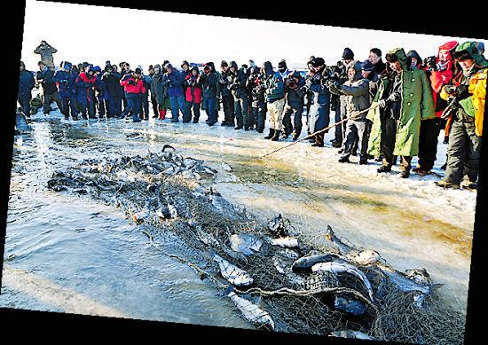 黑龙江镜泊湖展开冬季捕鱼 张春祥 摄