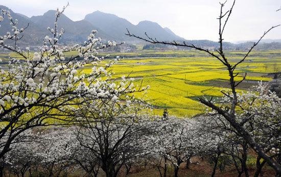 新浪旅游配图:贵州音寨 摄影:flora