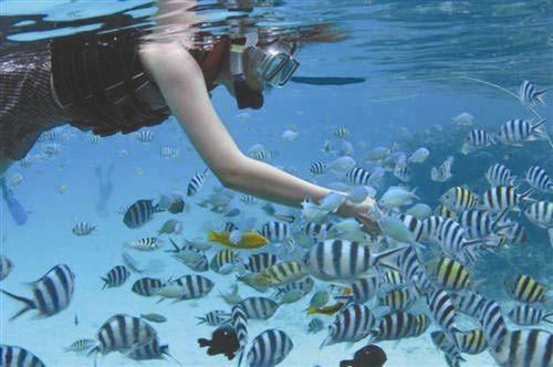 潜水梦幻地