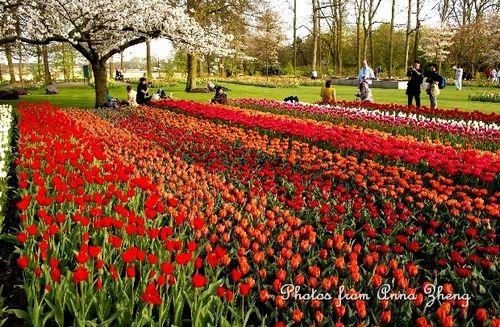 新浪旅游配图:花海 摄影:Ann在荷兰
