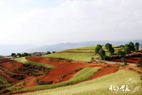 嫩绿的青稞点缀着红土地