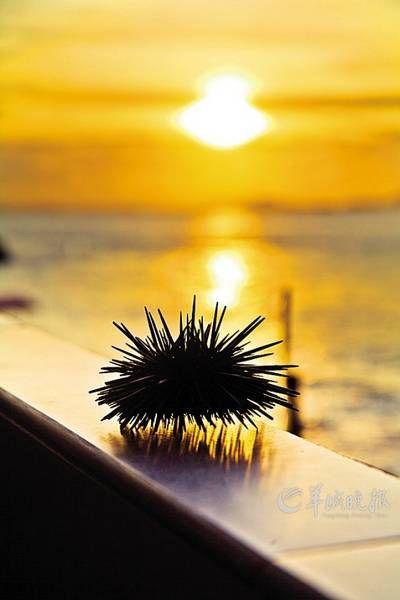 珠海外伶仃岛之夏