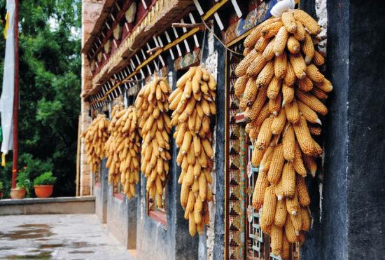 新浪旅游配图:墙上的玉米 摄影:托斯卡纳