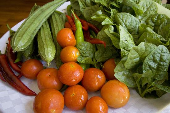 绿色健康饮食_绿色食品有哪些绿色健康饮食百科