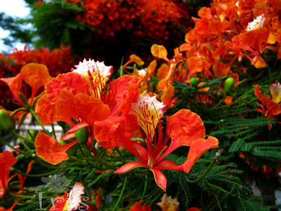娇艳的花朵