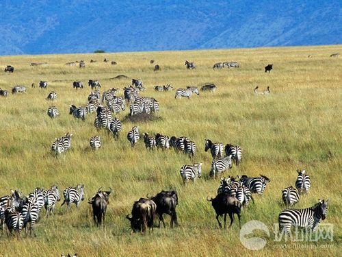 """王的盛宴 走进""""非洲动物大迁徙""""之路(3)"""