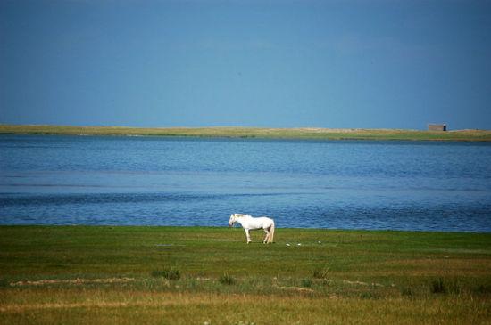 新浪旅游配图:青海湖尕海畔的白马 摄影:曼德拉草