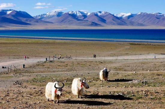 西藏纳木错:神仙居住的地方(组图)(3)