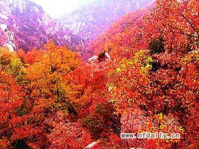 赏枫时节满山遍红